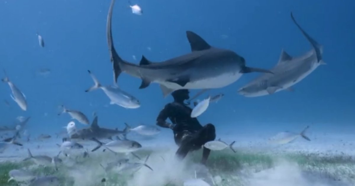 2 85.png?resize=1200,630 - Fearless Diver Meets Two Tiger Sharks and Somehow Befriends Them