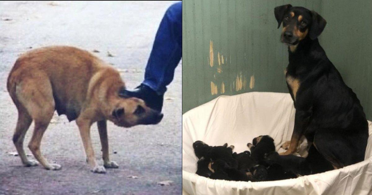 2020 01 29 e6af8de78aac.png?resize=300,169 - 【衝撃】動物虐待現場を紹介したのは、なんと母犬!27歳女性逮捕‼