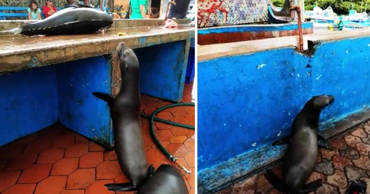 3 41.jpg?resize=1200,630 - Sea Lion's Adorable Begging For Food Forced The Fisherman To Give Him Treats