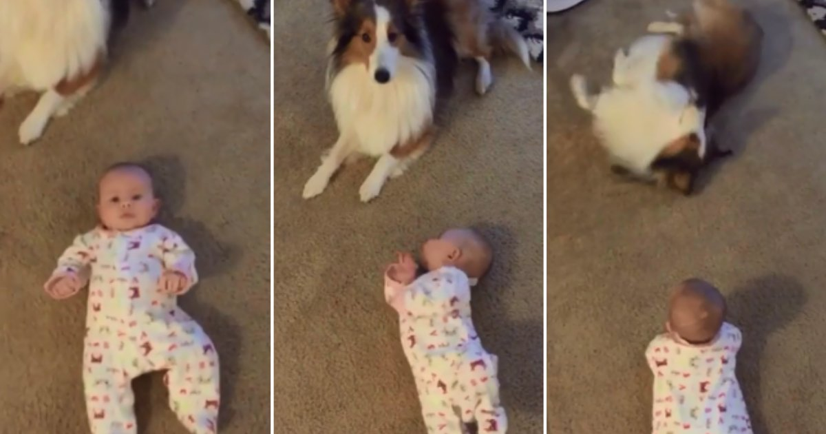 3 42.png?resize=1200,630 - Dog Teaches Baby How to Roll Over During Adorable Training Session