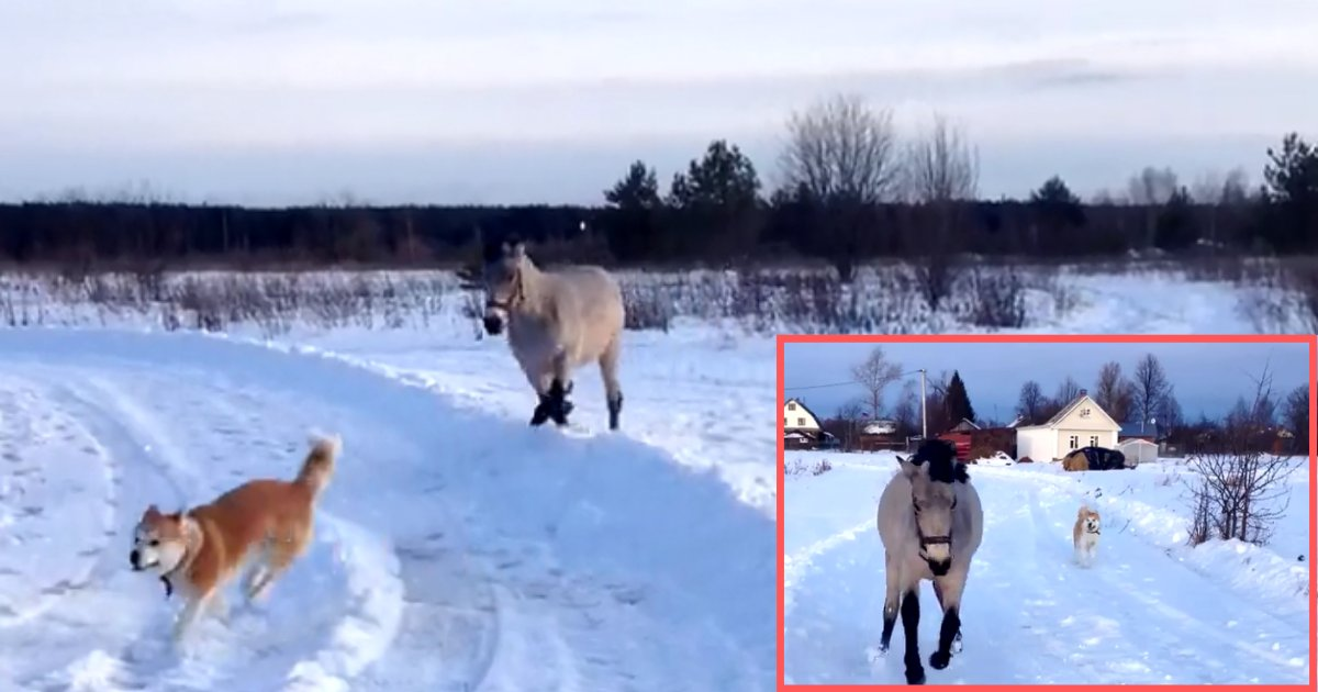 3 54.png?resize=1200,630 - Horse And Dog Have The Greatest Time In The Snow