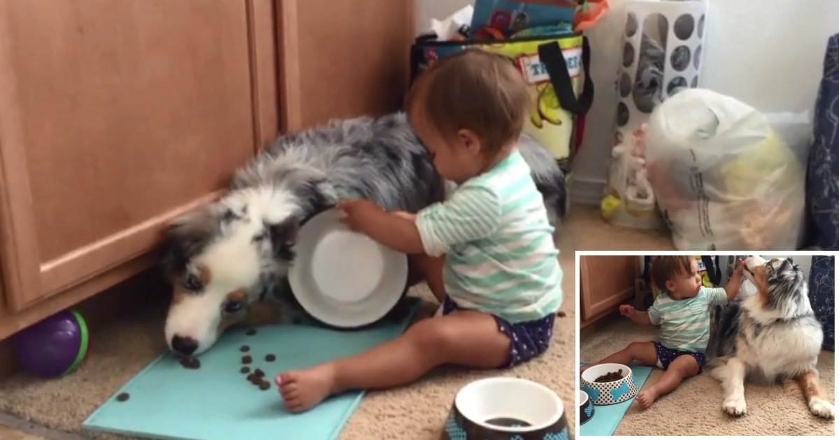 3 62.png?resize=1200,630 - A Baby Boy Feeds Australian Shepherd With His Little Hands