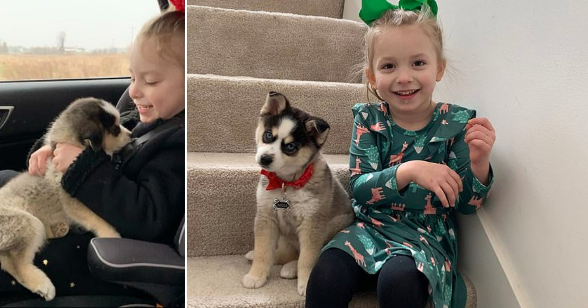 3 8.png?resize=1200,630 - A Girl With Cerebral Palsy Gets a Pet Dog As Motivation For Her Therapy