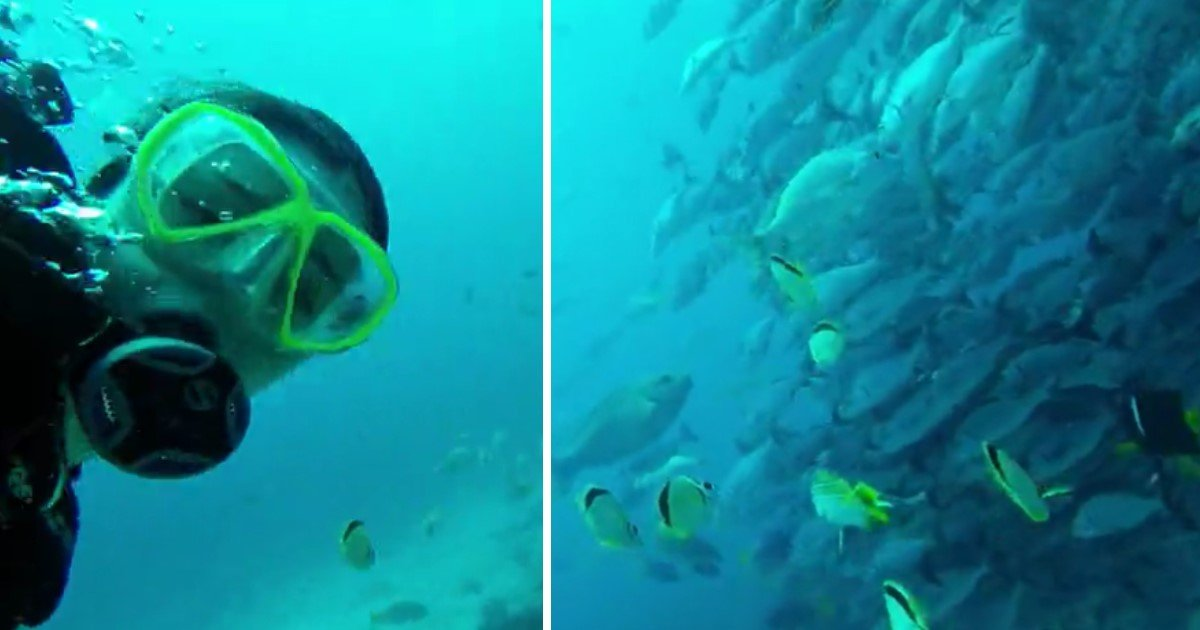 4 107.jpg?resize=1200,630 - Lucky Young Diver Got To Experience A Bait Ball From The Inside