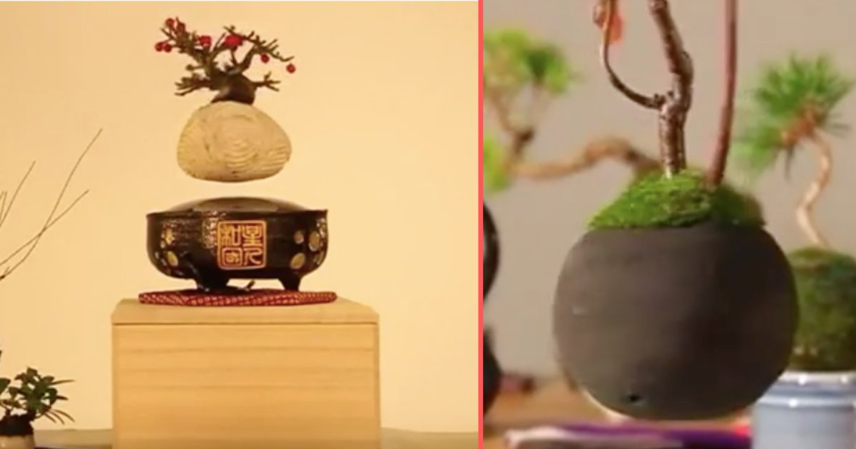 Magnetic Levitation Helps These Bonsai Trees To Float Small Joys