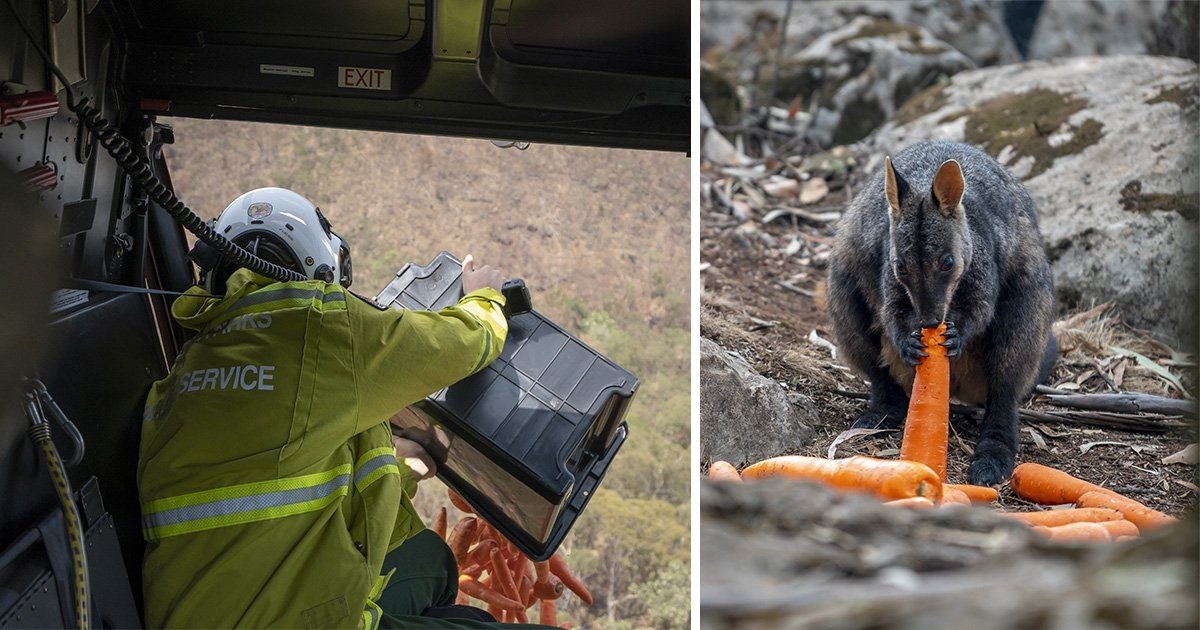 4 57.jpg?resize=1200,630 - Australia Airdropped Thousands Of Vegetables To Feed The Animals