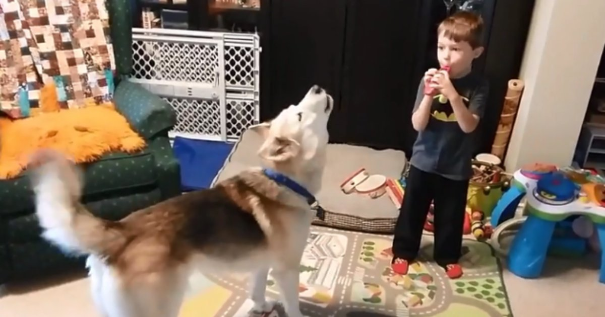 4 65.png?resize=1200,630 - Small Boys Whistles and the Husky Joins In