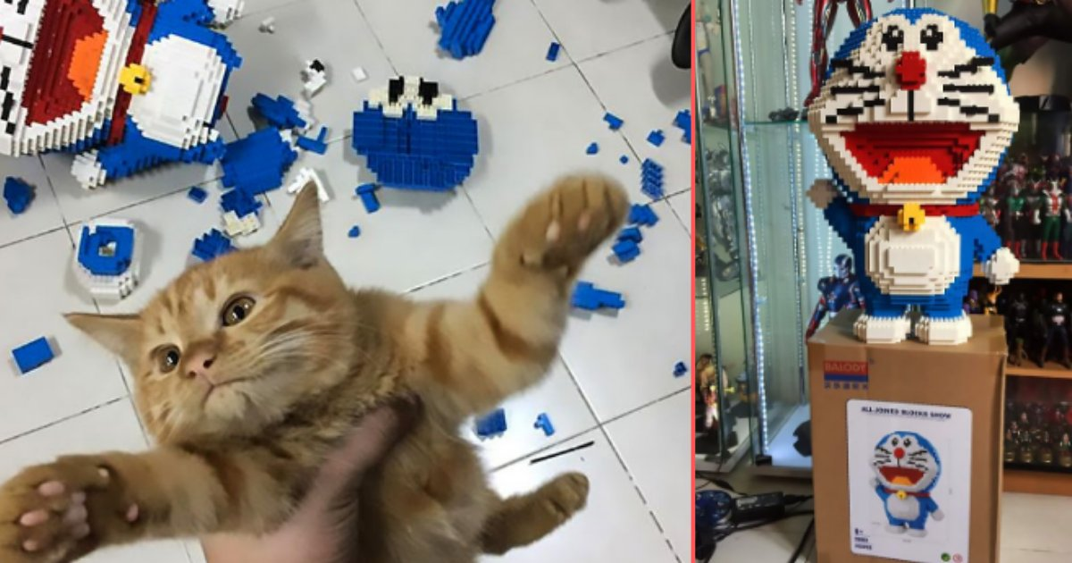 4 7.png?resize=1200,630 - Man Built A 2432 Piece Set In 7 Days And His Cat Destroyed It In 7 Seconds