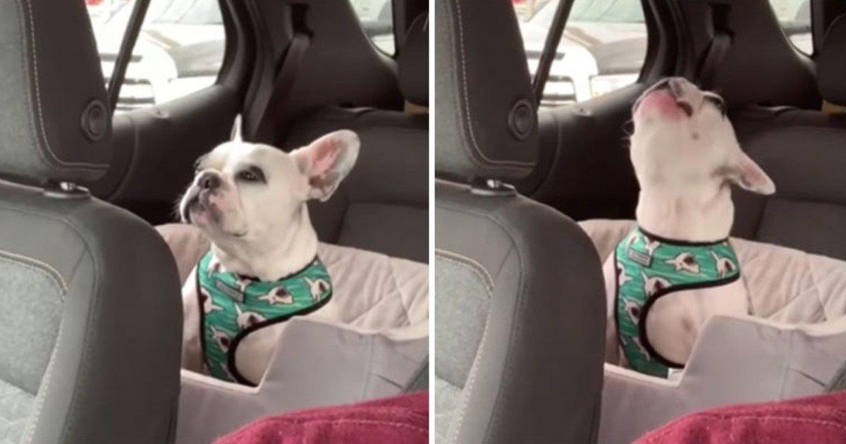 4 81.jpg?resize=1200,630 - Instagram Celebrity Dog Got Frustrated While Stuck In Traffic