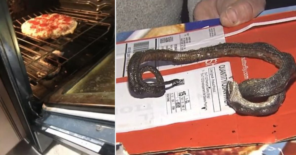 5 12.png?resize=412,232 - Couple Found A Dead Snake In Their Oven When They Were Preheating Their Pizza