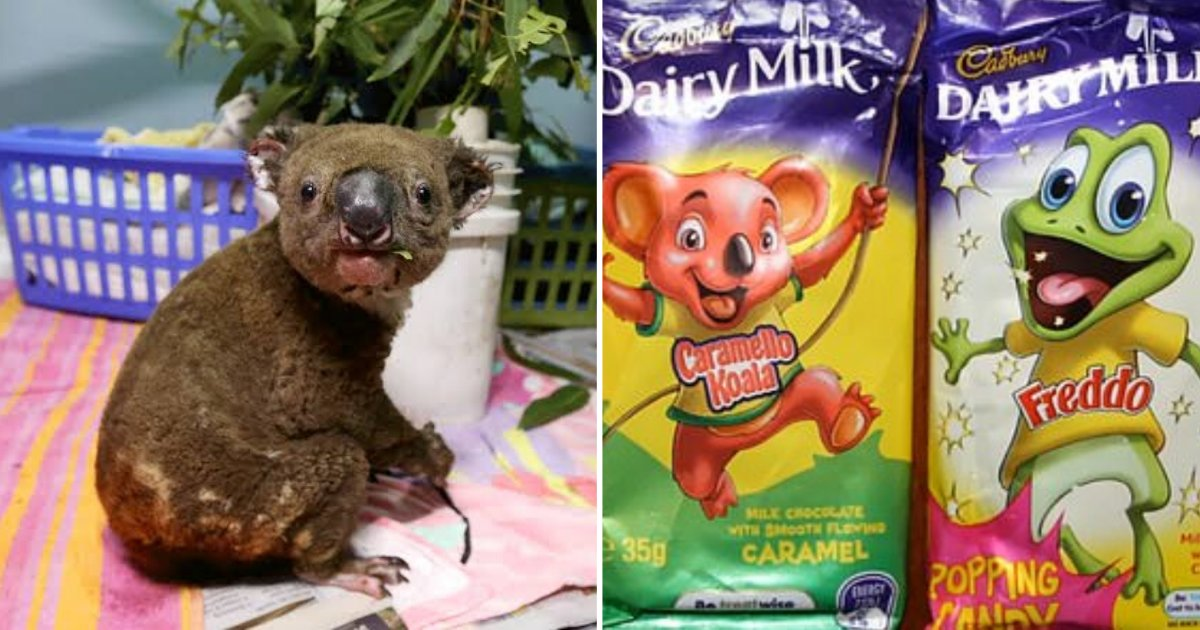 5 30.png?resize=1200,630 - Cadbury Has Announced to Donate Profits From a Couple of Their Products for The Australian Bushfire