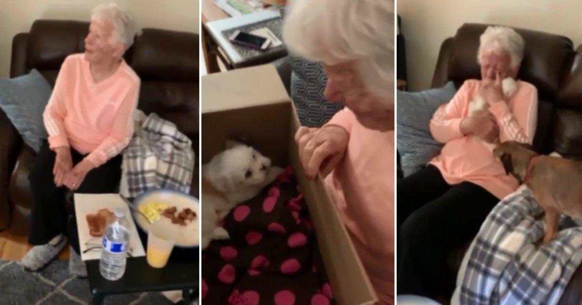 5 55.png?resize=1200,630 - Grandma Turns Lachrymose After Being Gifted With The New Pup