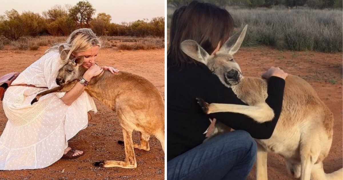 5 59.png?resize=1200,630 - This Kangaroo Can't Stop Giving Hugs To The Volunteers Who Saved Her Life