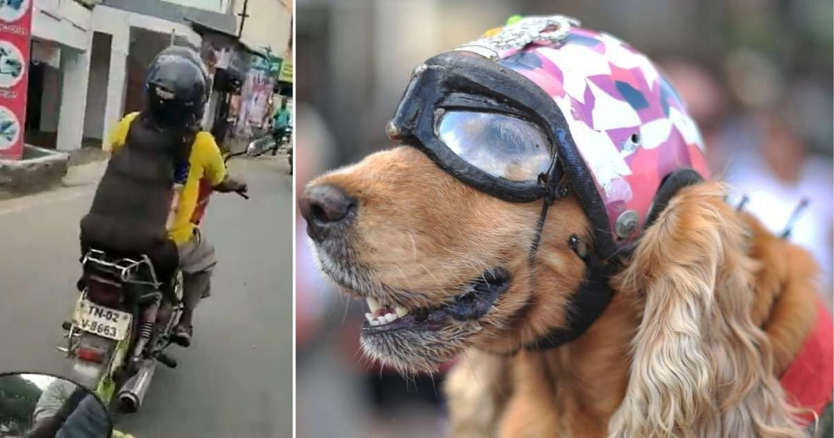 6 18.jpg?resize=1200,630 - Adventurous and Talented Dog Speeds Downhill On A Skateboard