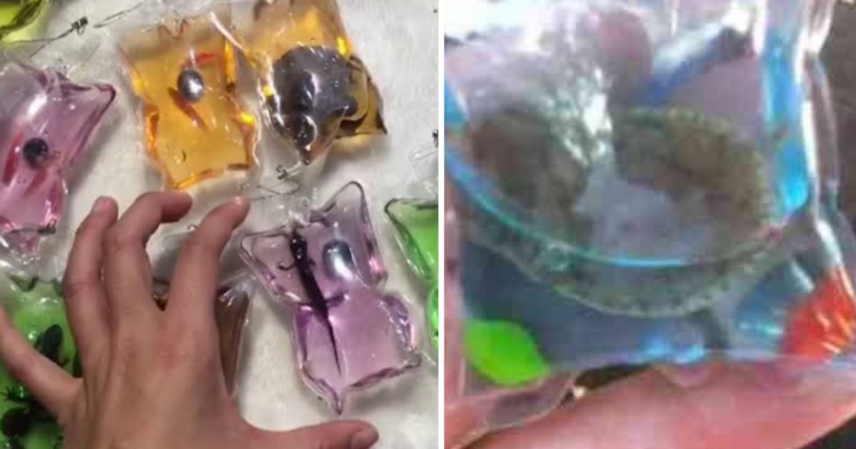 6 51.png?resize=1200,630 - Live Lizards And Turtles Sold Inside Key Chains In China