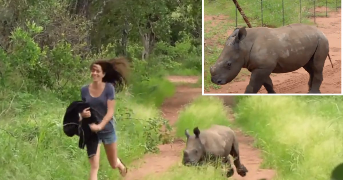 6 59.png?resize=1200,630 - Orphaned Rhino Baby Is Getting Better Everyday