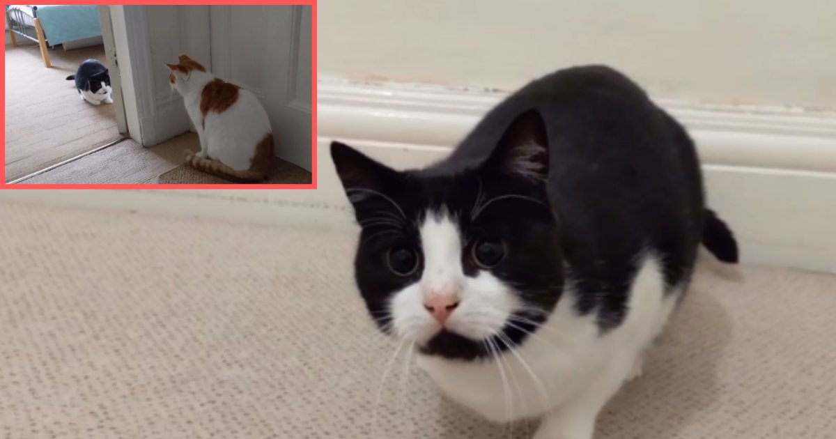 6 60.png?resize=1200,630 - Hilarious Cat's Unique 'Butt Wiggle' Left Everyone In Stitches