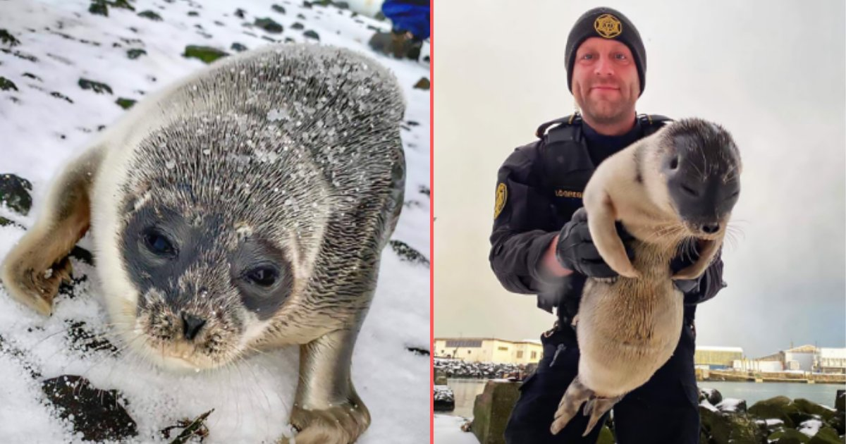 6 63.png?resize=1200,630 - Malnourished And Weary Seal Was Saved Miles Away From Home