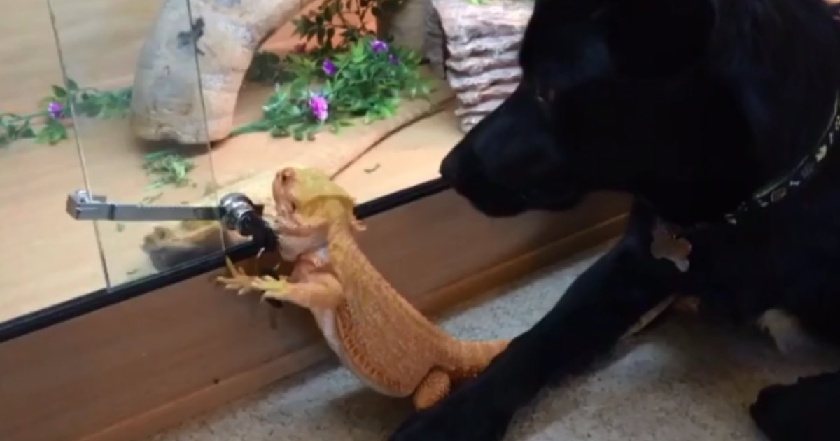 7 15.png?resize=1200,630 - This Pup's Reaction to Bearded Dragon's Behavior Will Make Your Day