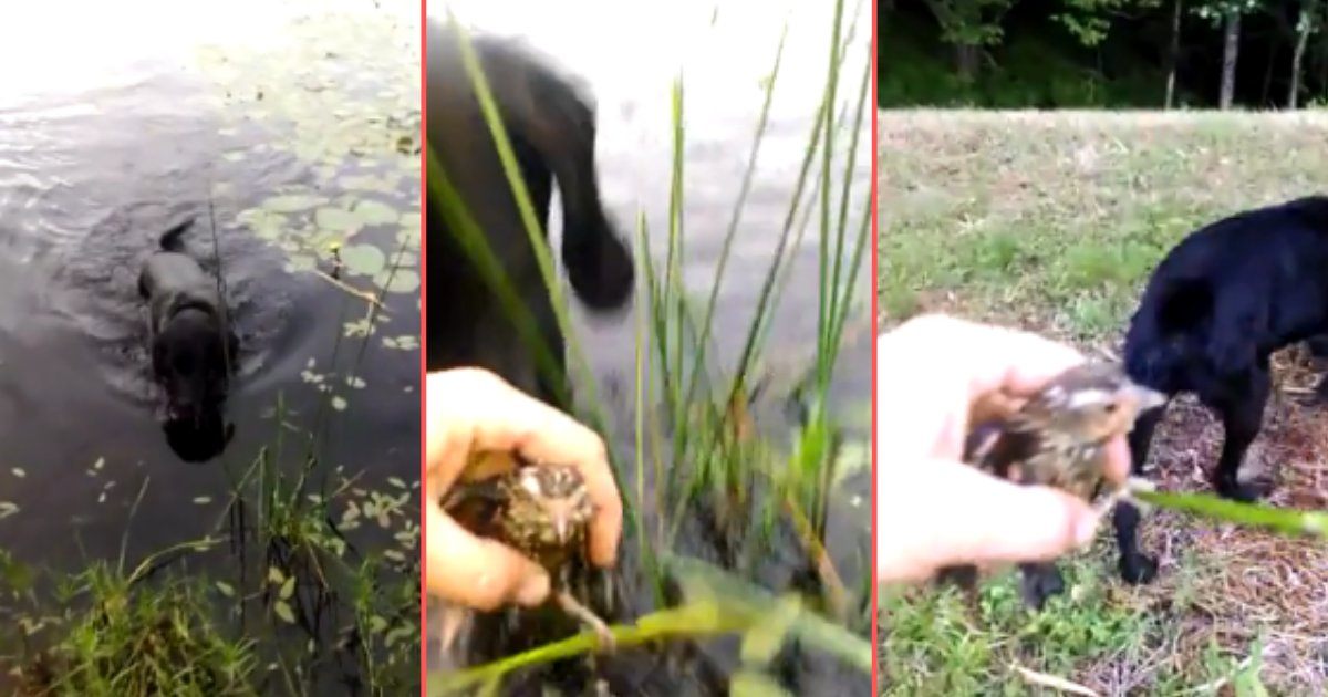 7 20.png?resize=1200,630 - Good Dog Saves The Life of a Baby Bird Drowning in a Lake