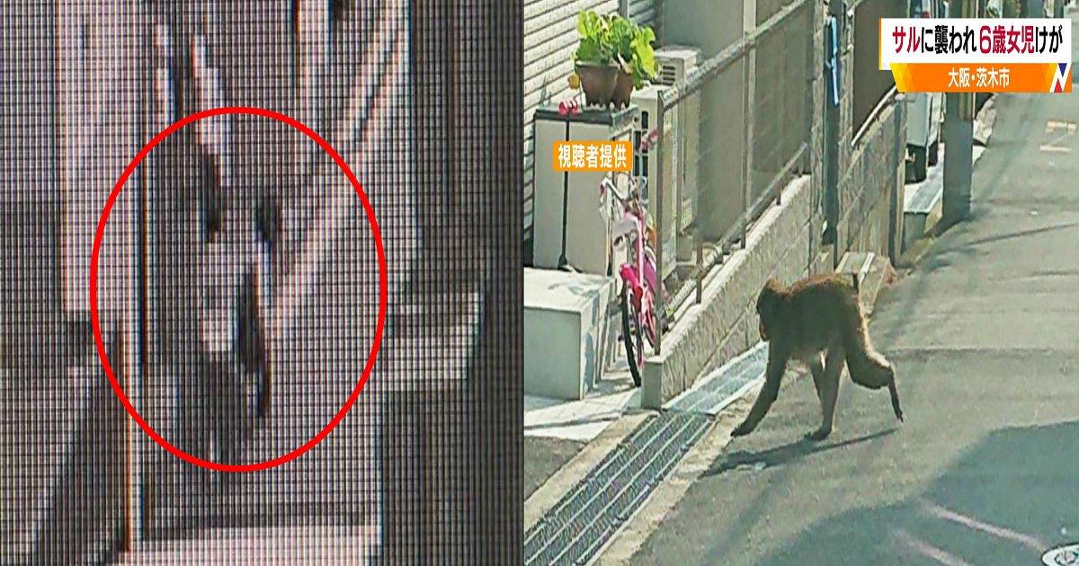 a 5.jpg?resize=1200,630 - 「めっちゃ痛かった…」大阪で6歳女児が猿に腕を噛まれて軽傷、襲われる瞬間映像も!