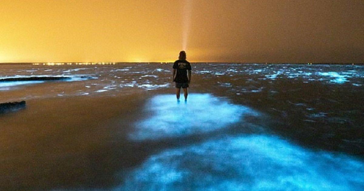 a3 4.jpg?resize=1200,630 - Photographer Mesmerized As He Ran His Hand Through Glowing Bioluminescent Algae In Australia
