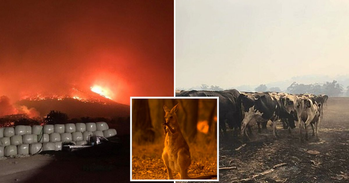 animals4.png?resize=1200,630 - Thousands Of Animals To Be Put Down After Suffering Severe Burns In Devastating Bushfires