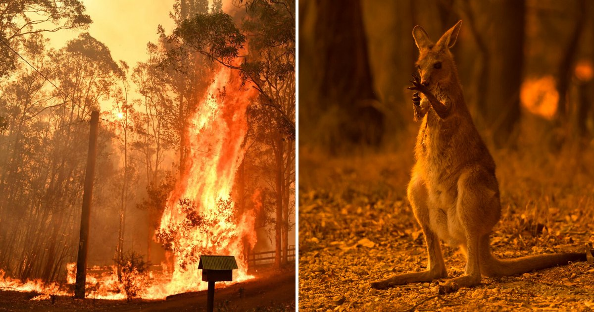 animals5.png?resize=1200,630 - Photographer Revealed 'Heartbreaking' Story Behind Viral Photo Of Kangaroo That Passed Away In Fires