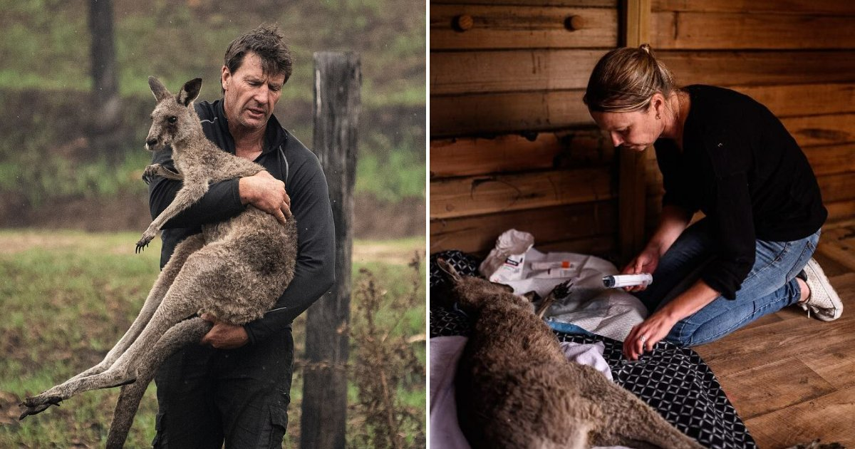 animals6.png?resize=1200,630 - Couple Opened Their Home To Take Care Of Injured Animals In Devastating Bushfires
