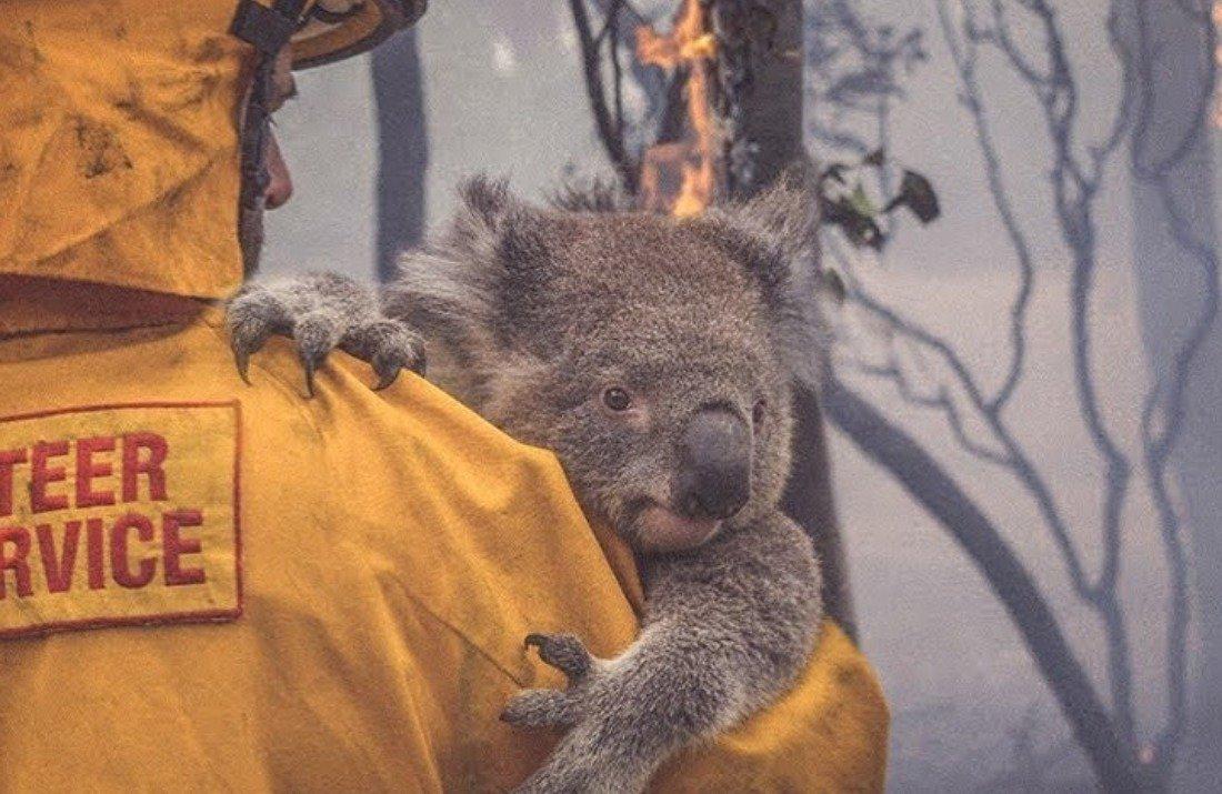autralie.jpg?resize=1200,630 - Hécatombe en Australie: la barre des 1,25 milliard d'animaux décédés vient d'être dépassée