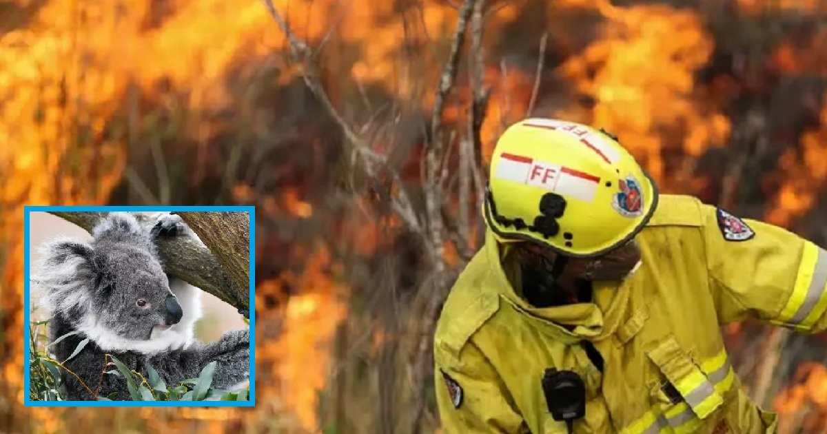 b3.jpg?resize=1200,630 - Millions Of Wild Animals Have Perished Due To The Bushfires In Australia