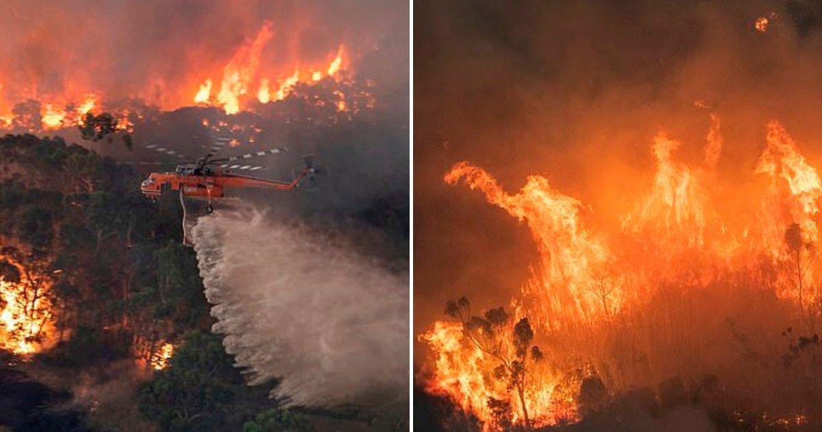 bush5.png?resize=1200,630 - 36-Year-Old Man Arrested For 'Starting A Blaze' In Victoria Amid Devastating Bushfires