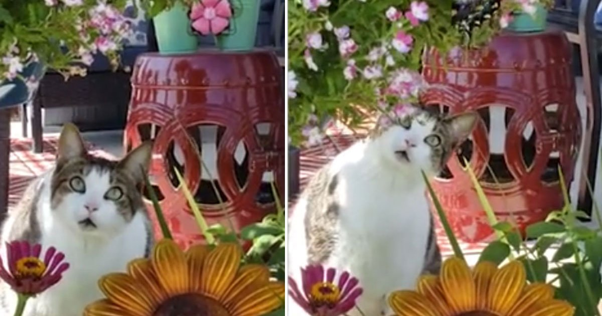 cat expression butterfly.jpg?resize=412,232 - Hilarious Cat's Expressions After Seeing A Beautiful Butterfly