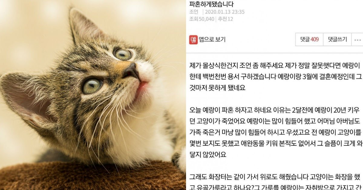 "cattttt.jpg?resize=1200,630 - ""고양이 때문에 파혼하게 됐습니다""...온라인 커뮤니티에 올라온 한 글"