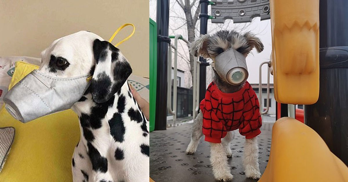 chinas expert for infectious diseases warned pets could also get infected by the coronavirus.jpg?resize=1200,630 - Pet Owners In China Are Buying Face Masks For Dogs Due To Coronavirus