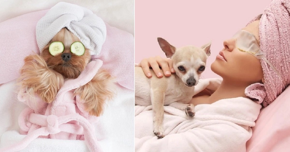 d3 1.jpg?resize=1200,630 - A Spa Offered Fantastic 4-Star Pampering For Dogs