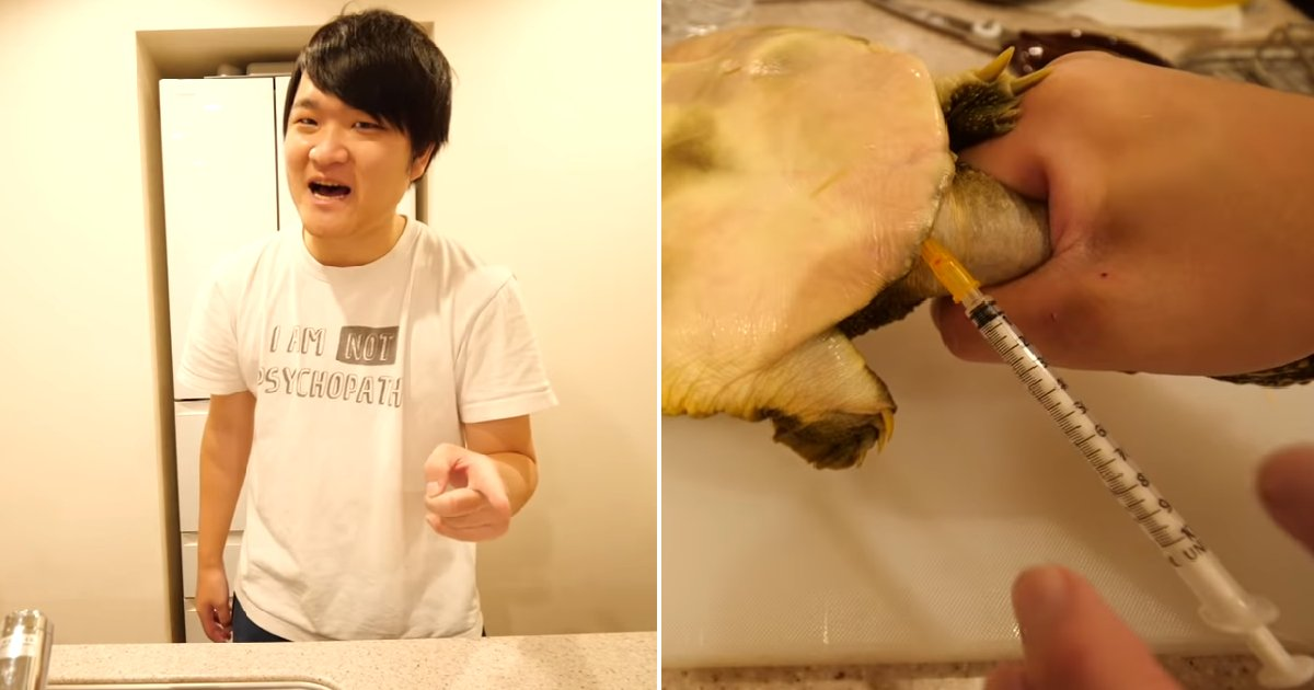 "eca09cebaaa9 ec9786ec9d8c 114.png?resize=300,169 - ""살아있는 자라를..."" 구독자 167만 '일본인 유튜버'가 올린 끔찍한 동물 실험 영상"