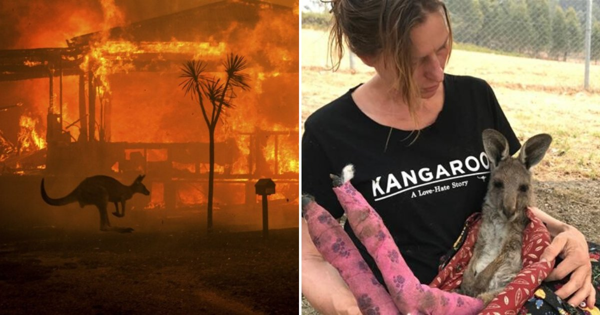 euthanize7.png?resize=1200,630 - Vets Are Forced To Put Down Animals In Mass Euthanization As Bushfires Wiped Out Millions