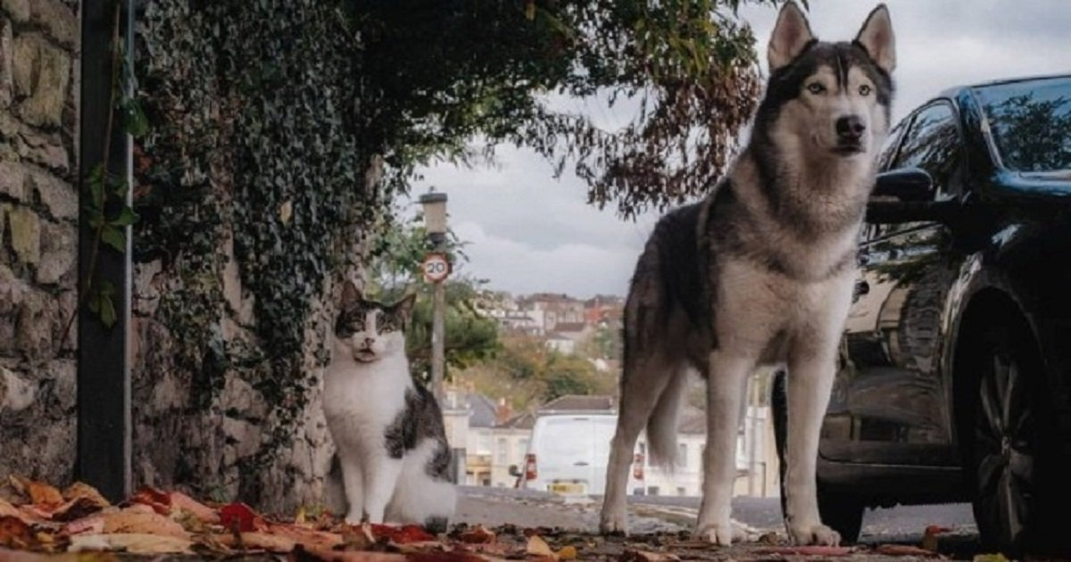 f5.jpg?resize=1200,630 - Cat And Dog Became Unlikely Best Friends Who Are Now Inseparable