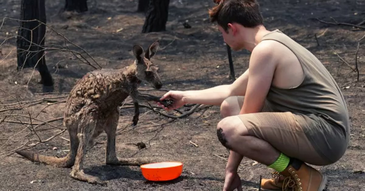 fires4.png?resize=1200,630 - Young Kangaroo Begged A Teen For Help After Being Burnt In Australian Bushfires