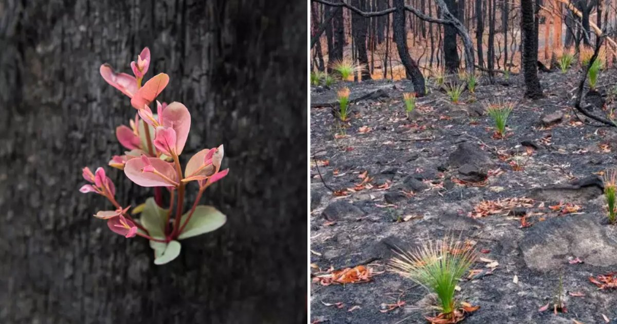 flora7.png?resize=1200,630 - Photographers Captured Signs Of Australian Bush Recovering After Apocalyptic Wildfires