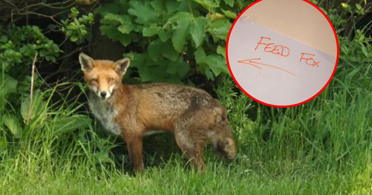 fox6.png?resize=1200,630 - Dad Left A Detailed Feeding Schedule To Keep Fox Happy While He's On A Vacation