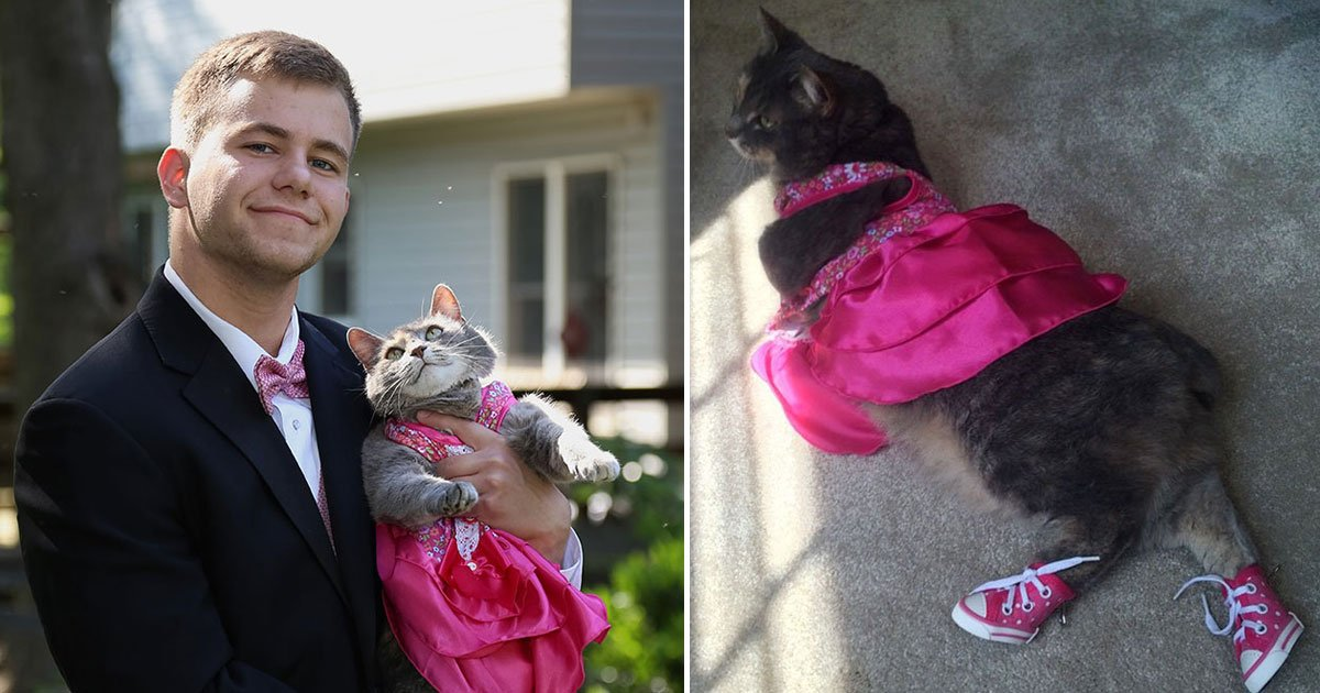 guy took cat prom.jpg?resize=1200,630 - Teen Took His Cat To Prom After He Couldn't Find A Date
