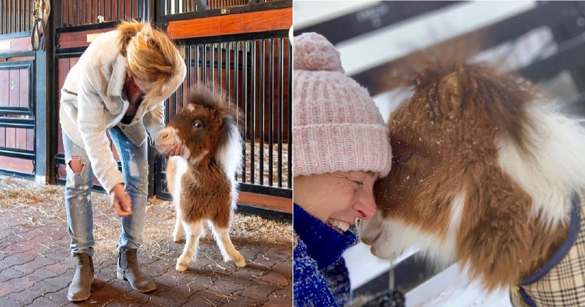 h3 1.jpg?resize=1200,630 - Martha The Adorable Horse With Dwarfism Found Her Forever Home