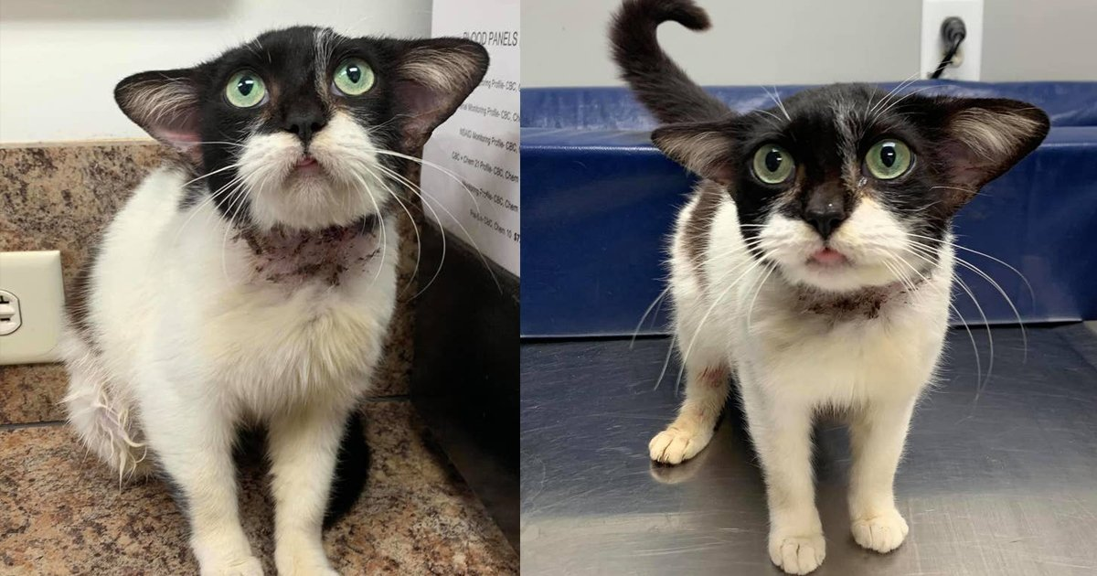 "hhsssd.jpg?resize=1200,630 - Rescue Special Kitty Nicknamed As ""Baby Yoda"" Cat"