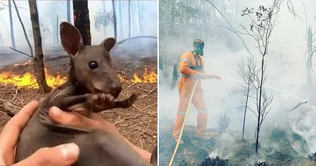 joey6.png?resize=1200,630 - Volunteer Firefighter Rescued A Baby Kangaroo From The Blazes And Pleaded With People For Donations