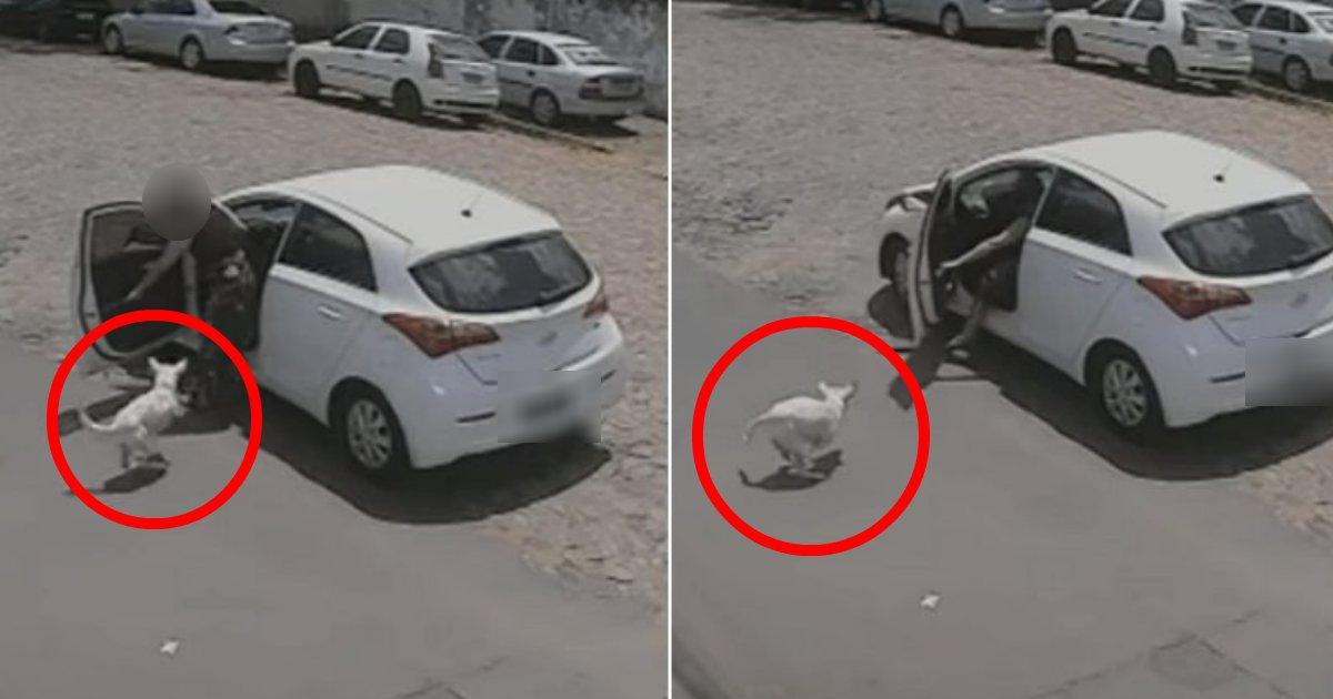 kaiinu.png?resize=412,232 - 前足がないという理由で飼い主に道端にポイ捨てされた飼い犬の呆然とした姿が見るに堪えない…