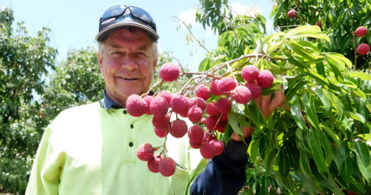 lychee6.png?resize=1200,630 - Farmer Has Successfully Developed The First Ever Seedless Lychees In Australia After Trying For Almost Two Decades