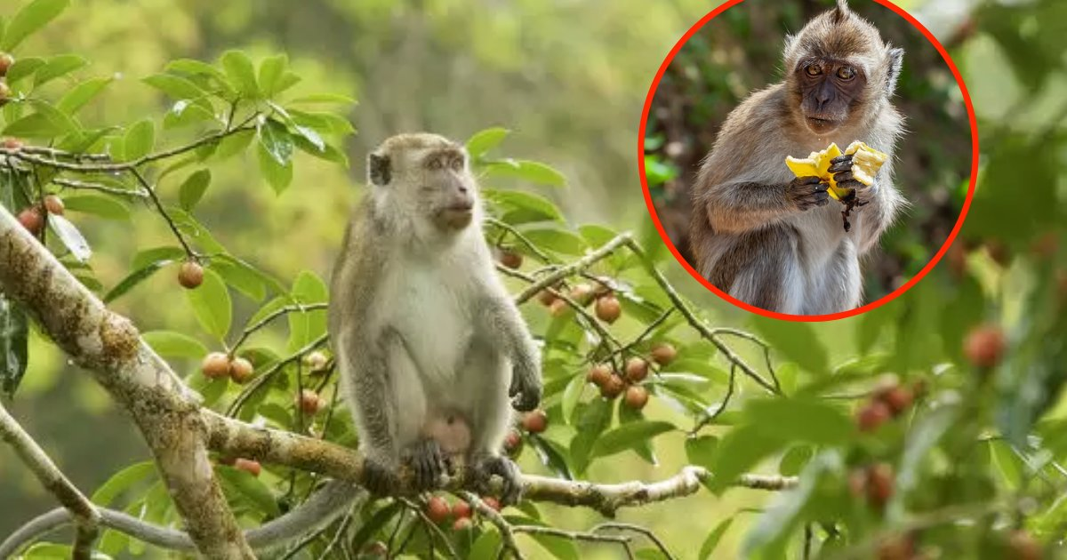 monkeys6.png?resize=412,232 - Photographer Shared Images Showing Macaques Being Sold For Only $5 In A Tourist Hotspot