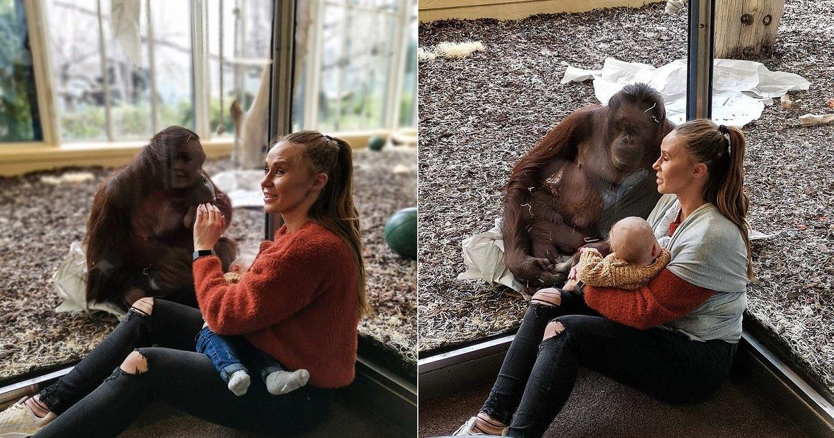 o3.jpg?resize=1200,630 - Orangutan Tenderly Approached Nursing Mom In An Extraordinary Encounter